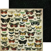 Papier - Anthology - Entomology