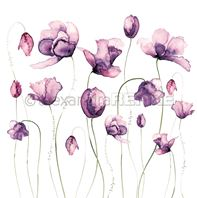 Papier - Many tulips violet