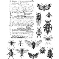 Cling stamps - Entomology